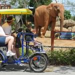 Зоопарк в Майами